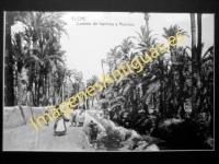 Elche - Camino de huertos y Molinos