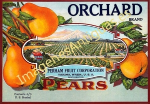 ORCHARD BRAND - PEARS